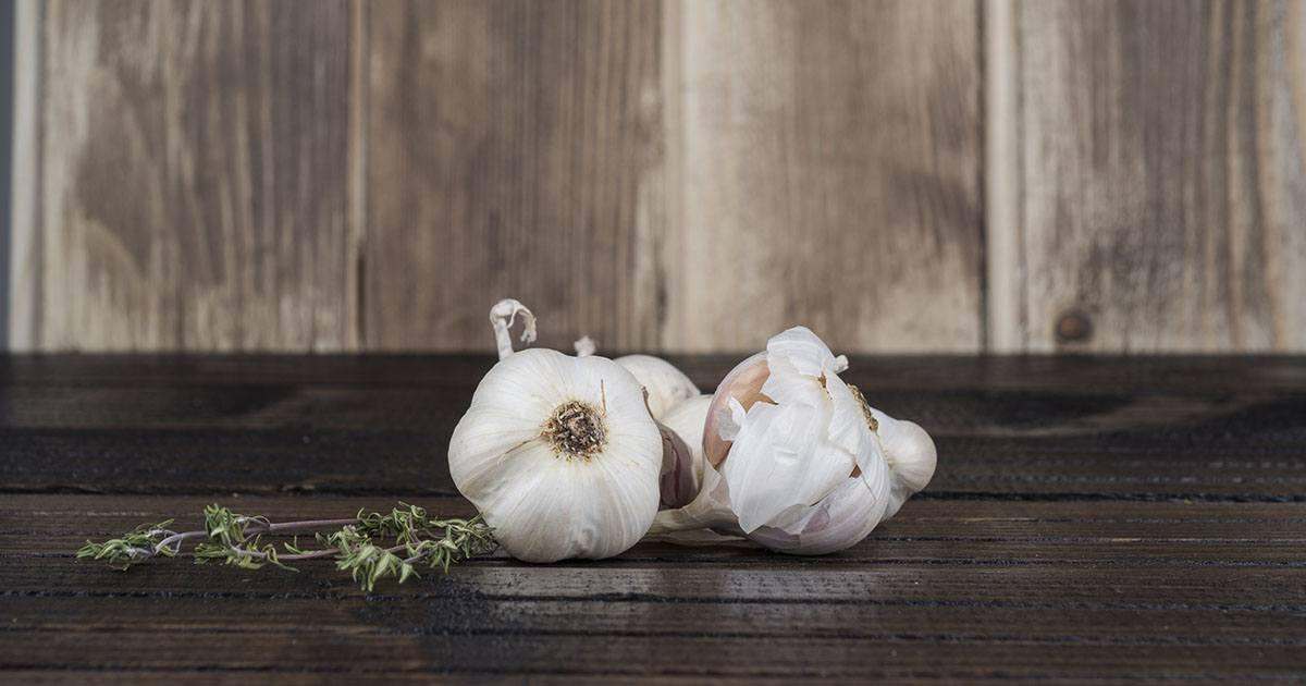 [Conheça 15 incríveis benefícios do alho para a saúde]